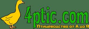 Птицеводство от А до Я — 4ptic.com