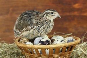 эстонский на яйцах