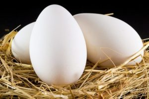 гусиное яйцо