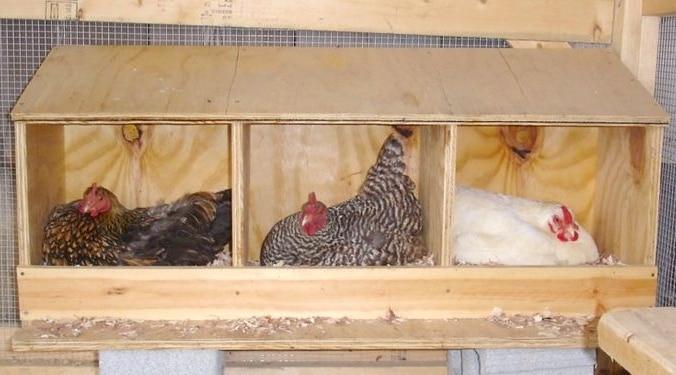 Сделать гнездо для кур с яйцесборником