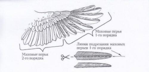 Схема подрезки крыльев