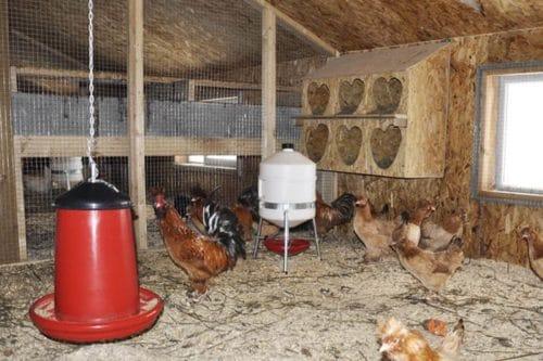 теплее помещение для кур