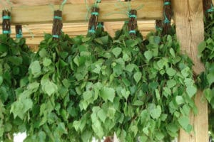 Веники из лиственных деревьев