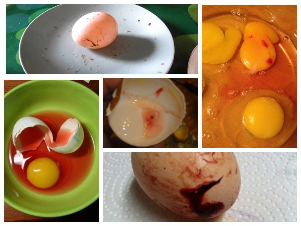 Почему бывают яйца с кровью и безопасно ли их есть