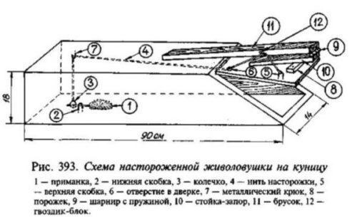 Схема ловушки на куницу или хорька