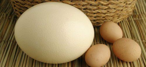 Применение страусиных яиц